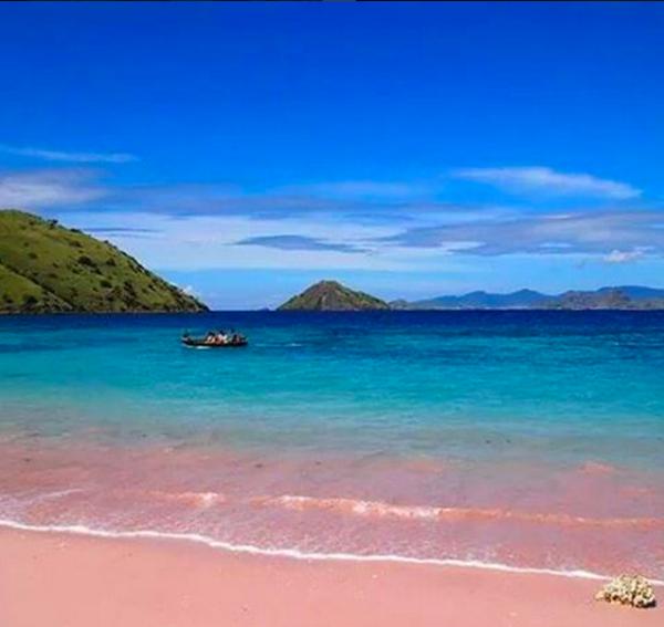 pink beach indonesia (4)